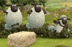 Shaun the Sheep: Ali